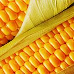 Aminokyseliny kukuřičného glutenu