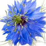 185_NigellaPosev Seria Master Herb