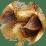 166_SemenaLesnBuka Seria Master Herb