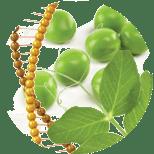 91_ProteinGoroha Seria Zhen Fei