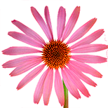 89_Ehinazeya Specjalistyczne środki kosmetyczne