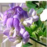 189_Lucerna Seria Master Herb