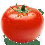 Pomidor zwyczajny