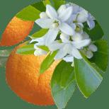 167_Pomeranez Seria Master Herb
